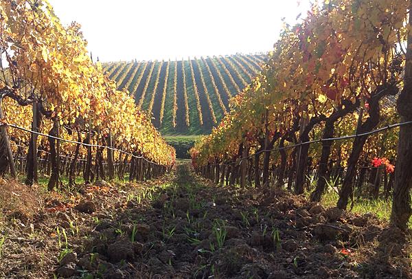 Wine Tour Ruffino: i grandi classici